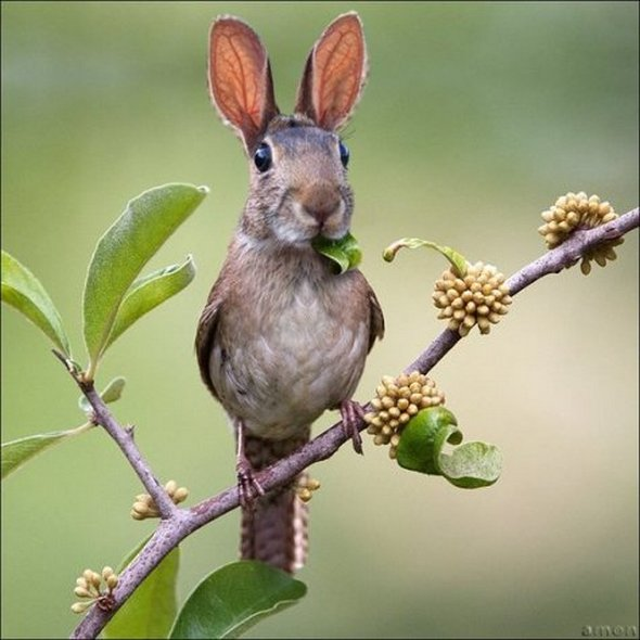 Birbbit